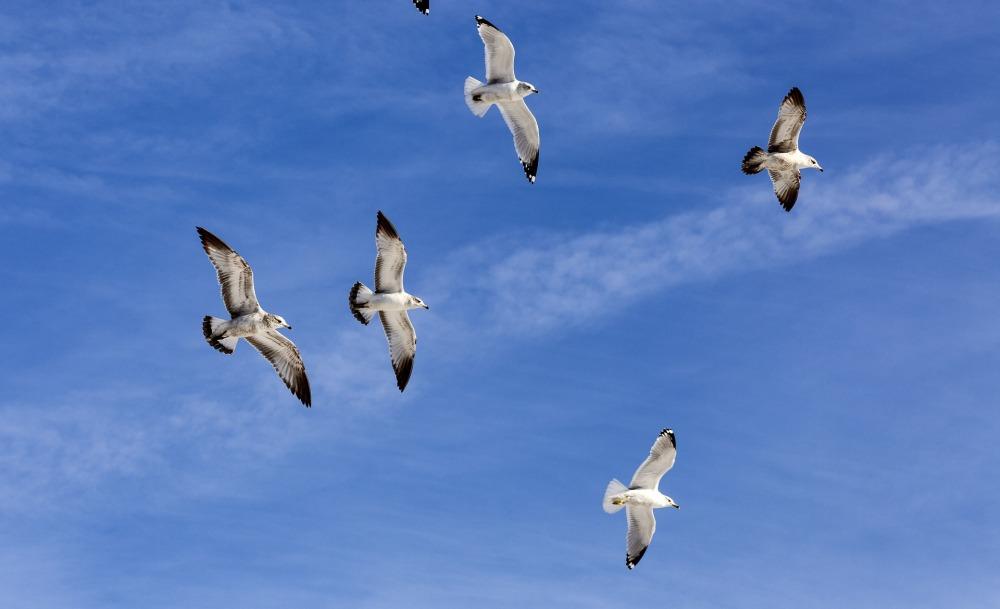flock-1183940_1920